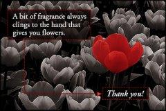 Bwr Thankyou2