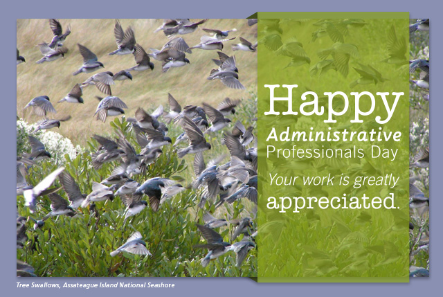 Happy Administrative Professionals Day - Your work is greatly appreciated.