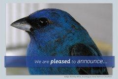 Callout Announcement