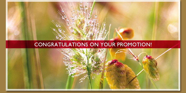 Congratulations on your promotion!