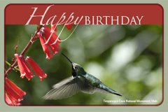 Postcard Birthday2