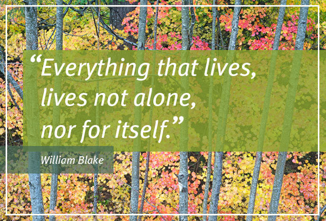 Everything that lives, lives not alone, nor for itself. --William Blake