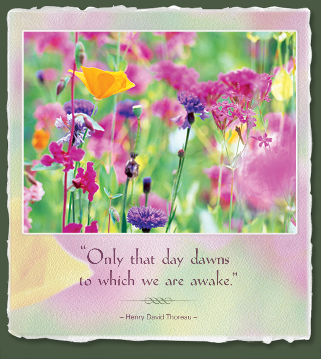 Only that day dawns to which we are awake. --Henry David Thoreau