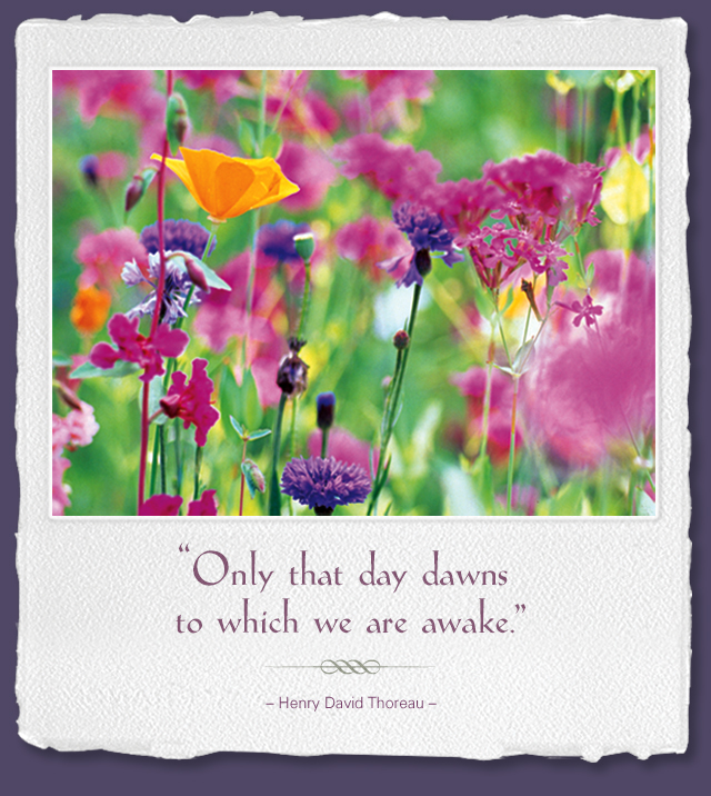 Only that day dawns to which we are awake. -- Henry David Thoreau